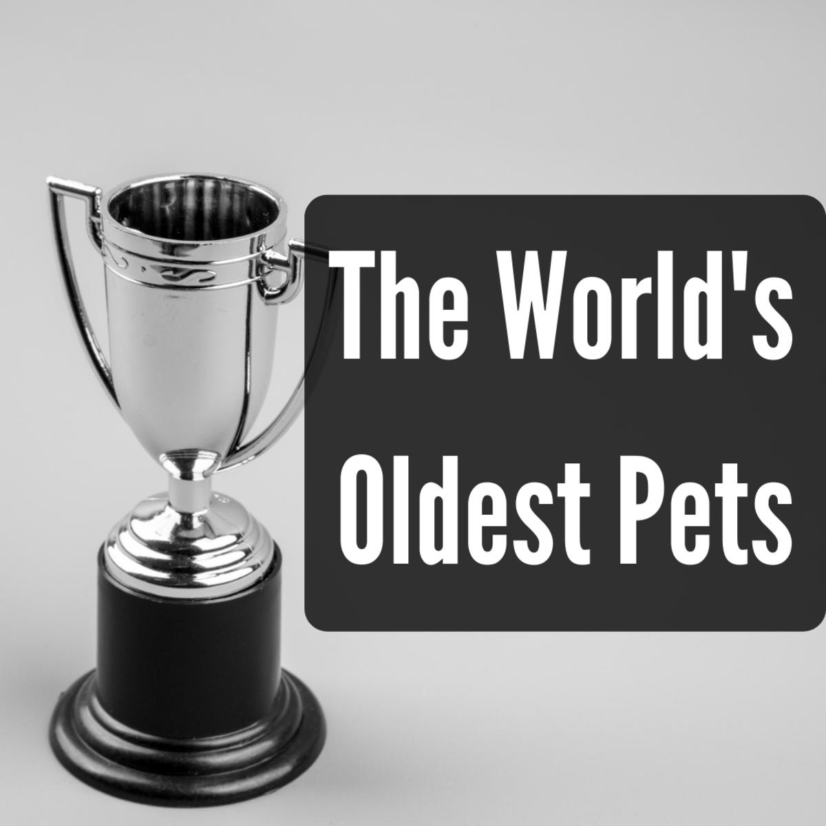 Meet the World's Oldest Pets