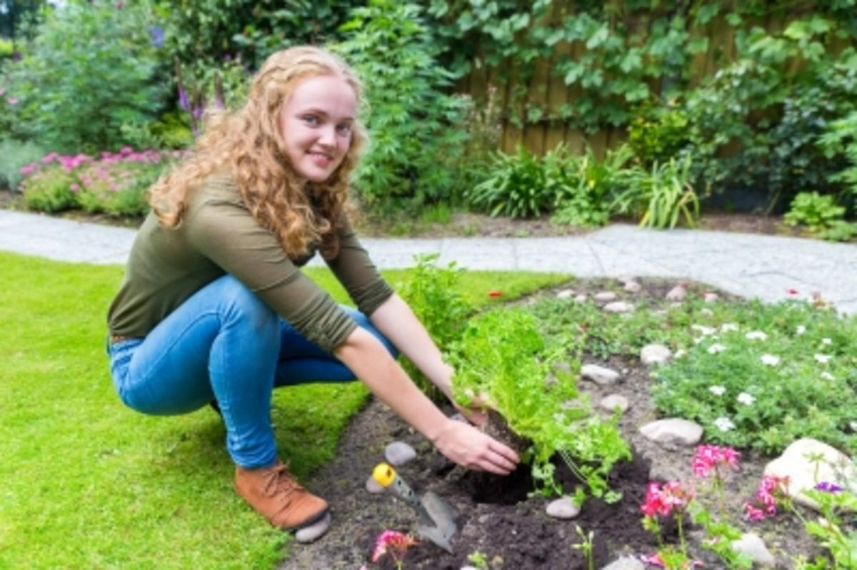 Woman Planting a Herb Garden