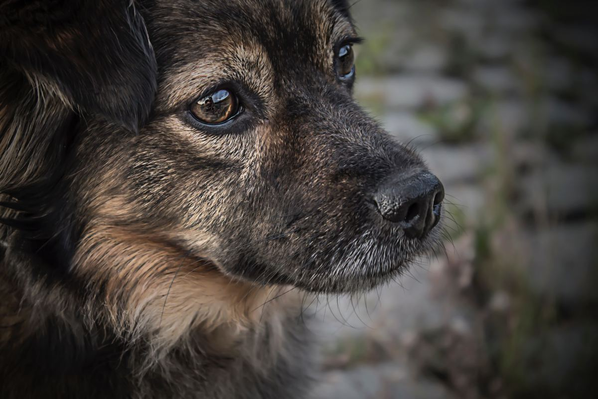 How to Cope With Losing a Pet: The Day My Dog Died