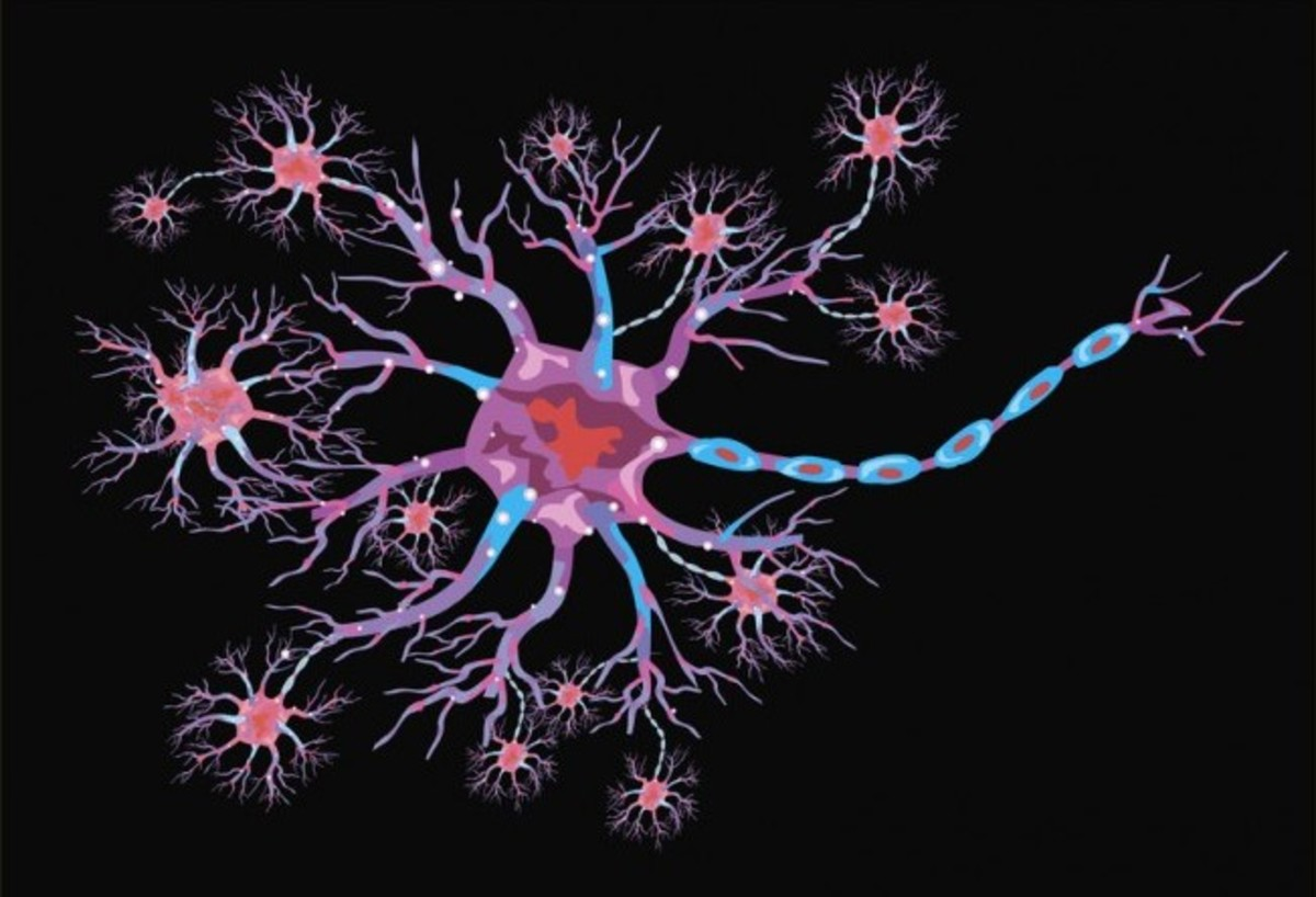 Neuroscience Basics: The Neuron