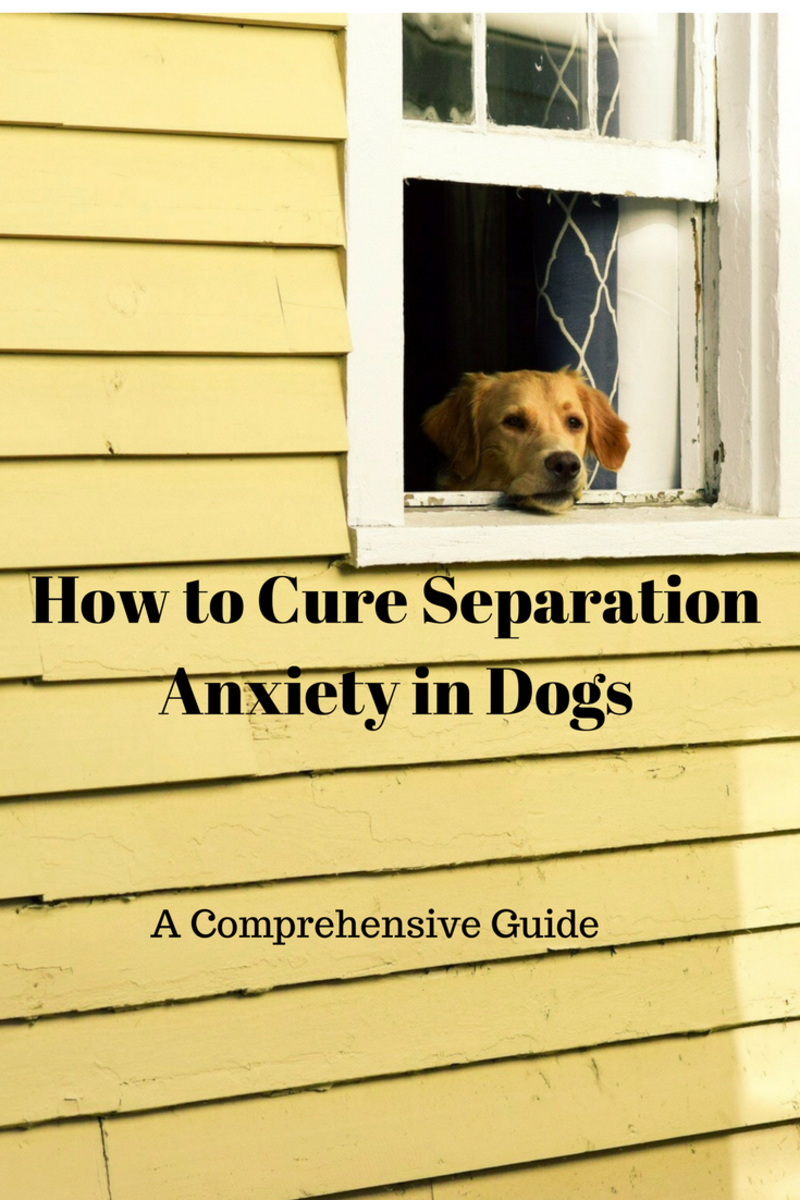 How to cure separation anxiety in dogs.