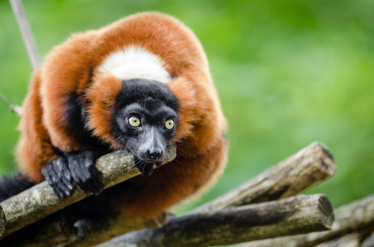 10 Exotic Pets That Are Legal in Texas | PetHelpful