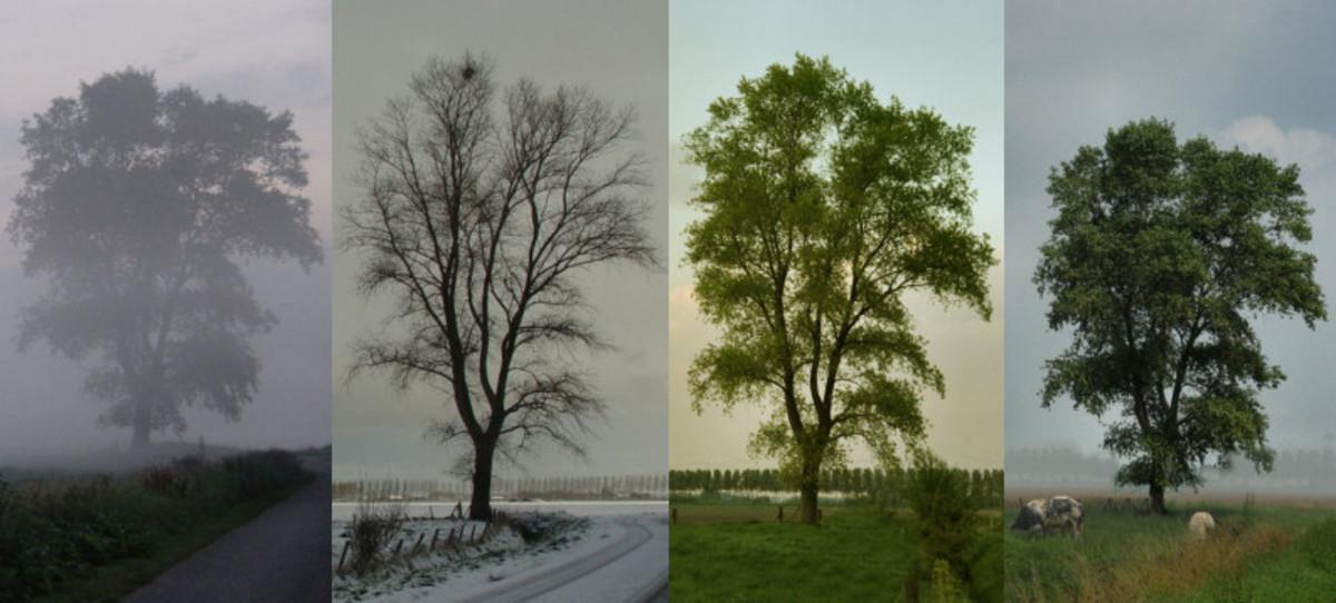 Poem - Sestina - Seasons
