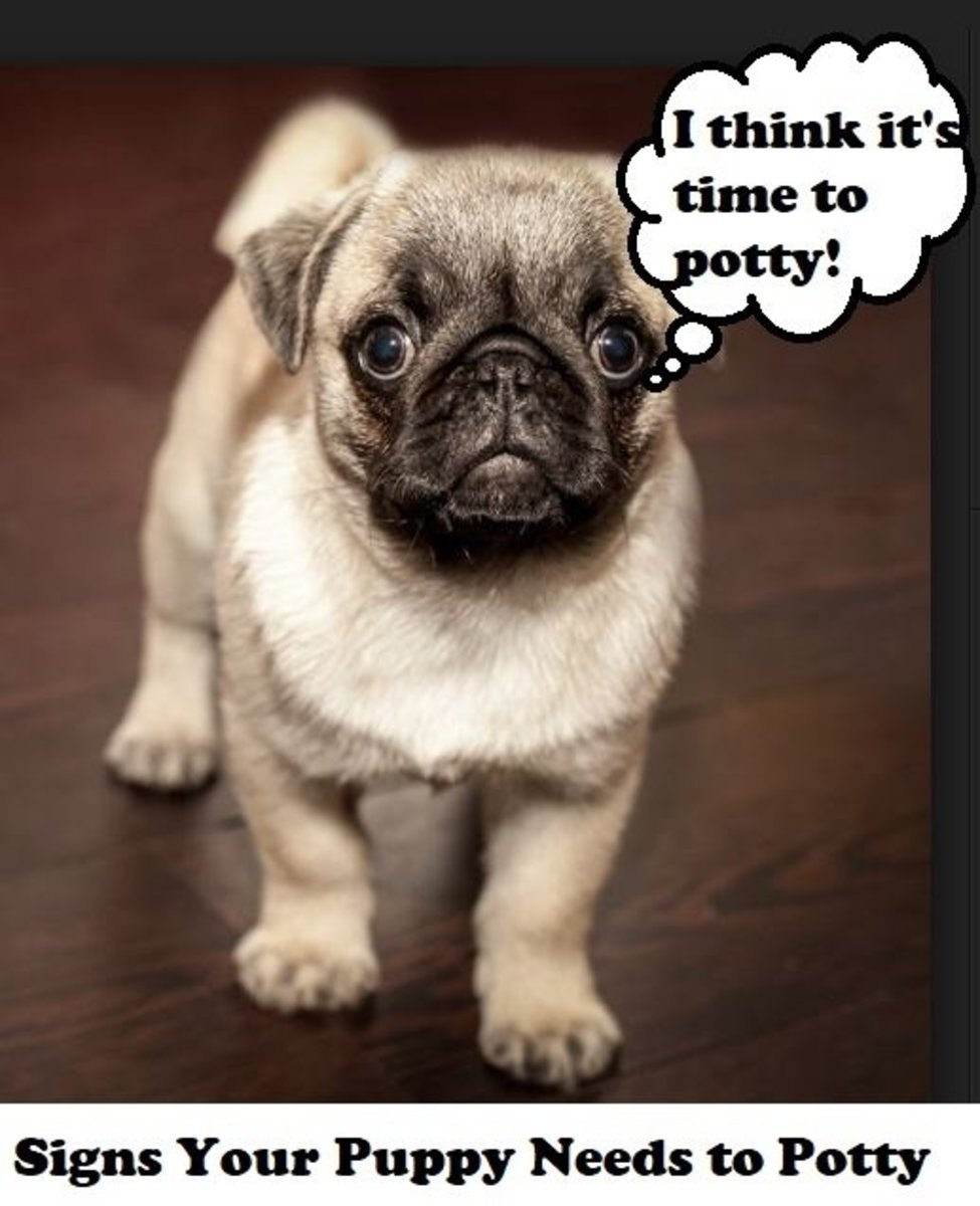 Signs Your Puppy Needs to Go Potty