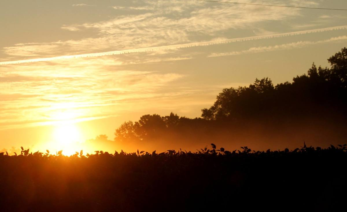 Sunrise over a field of North Carolina soybeans
