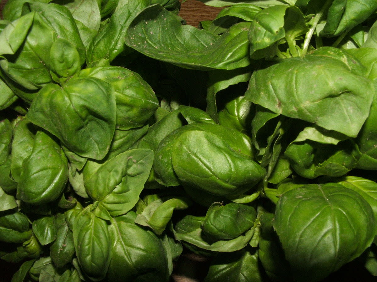 collecting-herbs-for-medicinal-uses