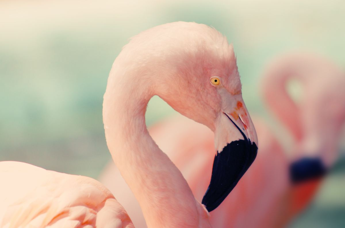 7 Reasons Why Pink Flamingos Are Absolutely Fabulous