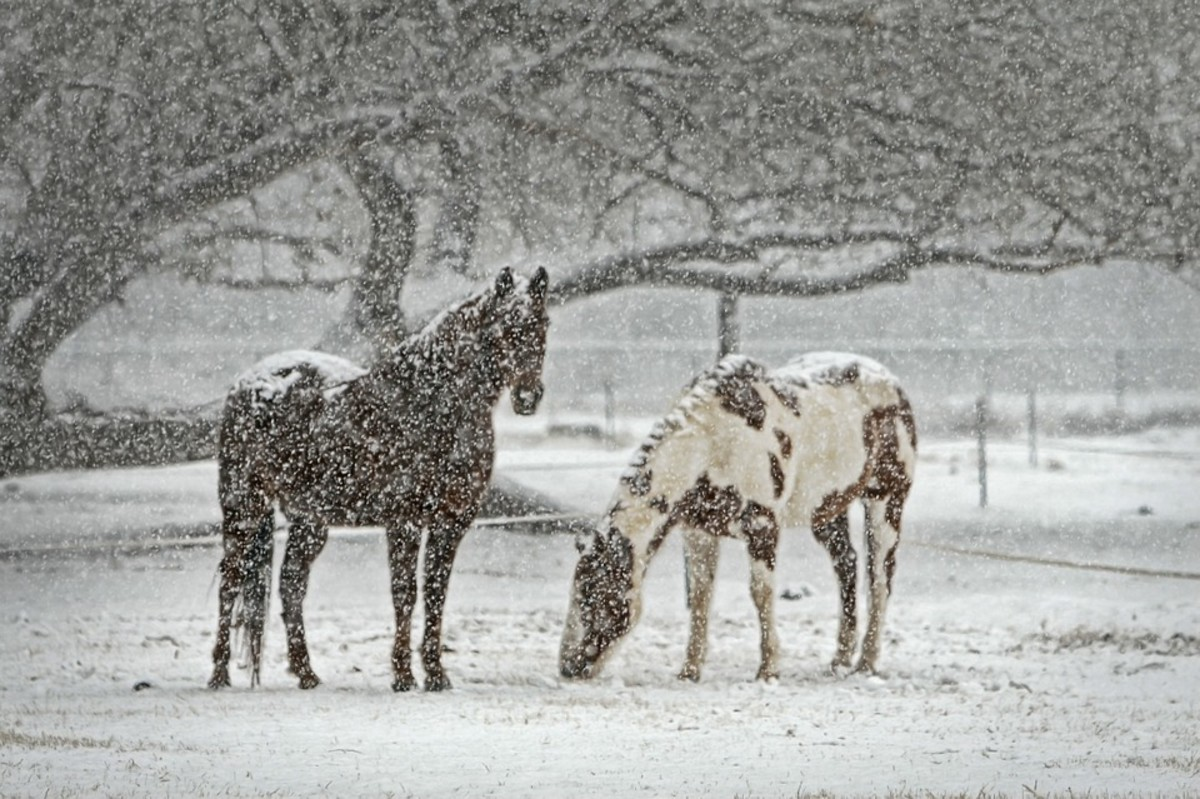 Do you really want to go out into that snow and chase your horse?