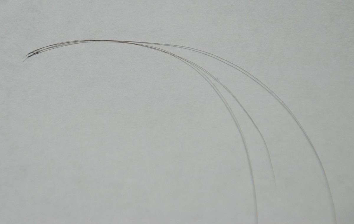 Here are three hairs protruding from the one follicle.
