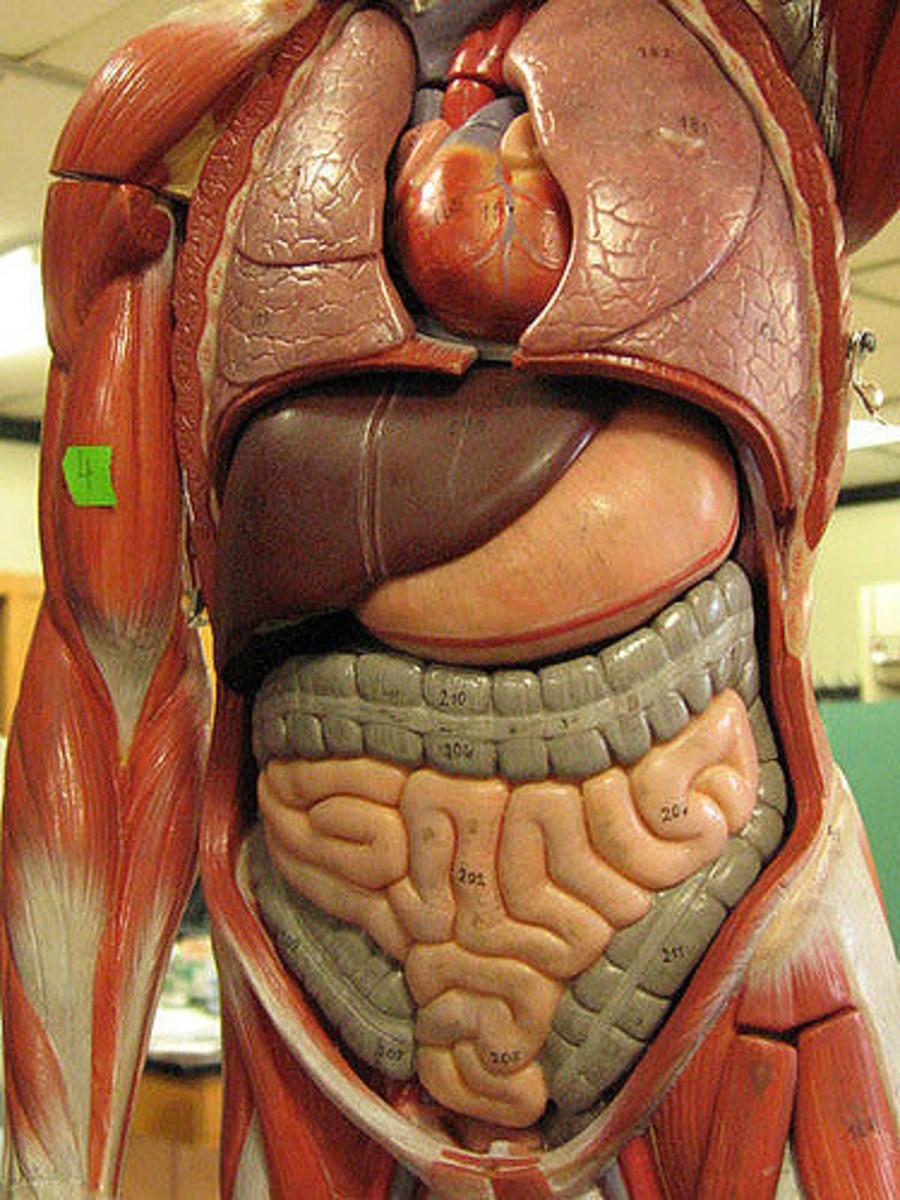 View Endoscopy Procedure: Capsule Endoscopy Procedure: A Personal Experience