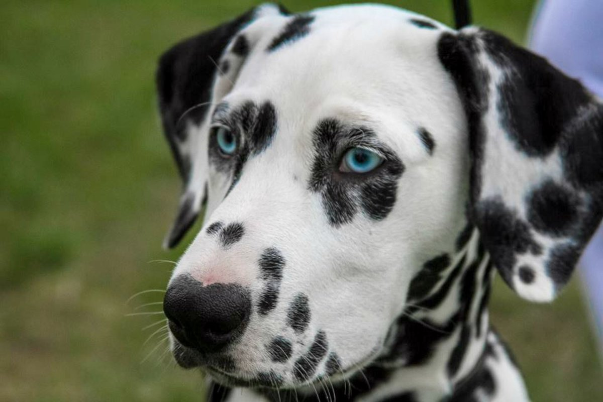 66 Unique Names for Dogs With Spots