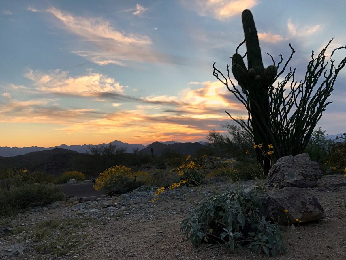 What's so Great About Arizona?
