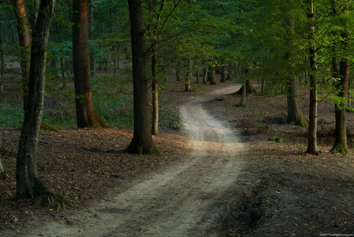 A Road through the Forest: A Fable