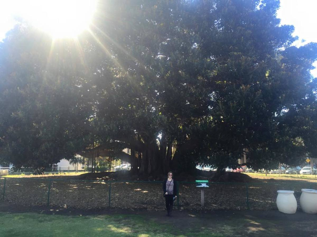 Here I am in front of the fig tree.