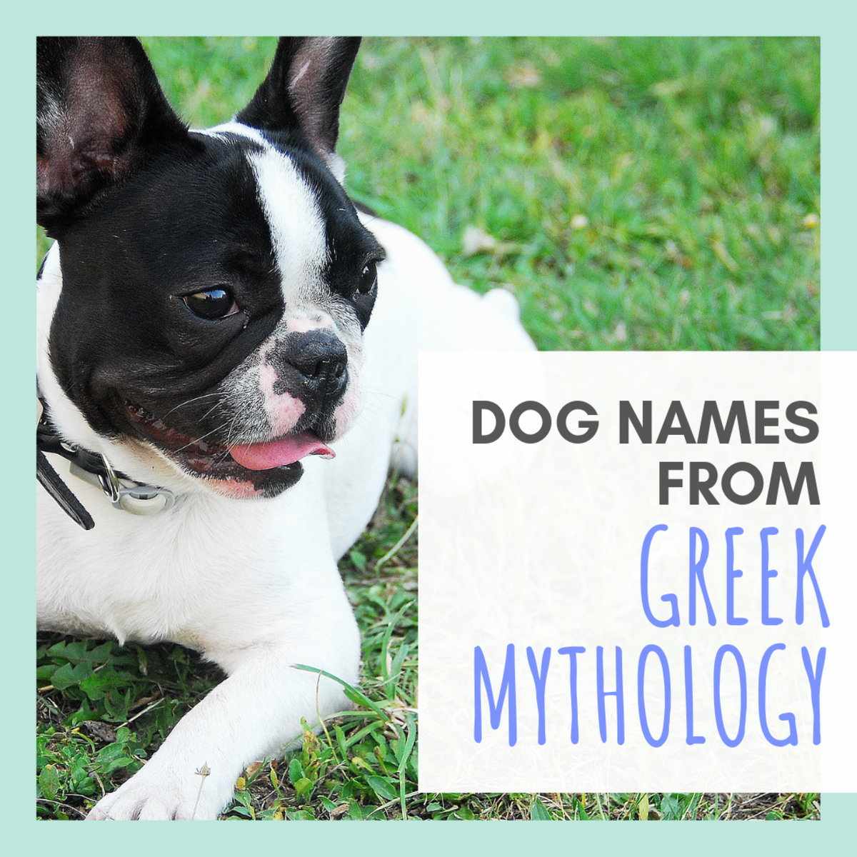 15 Names for Your Dog Based on Greek Mythology