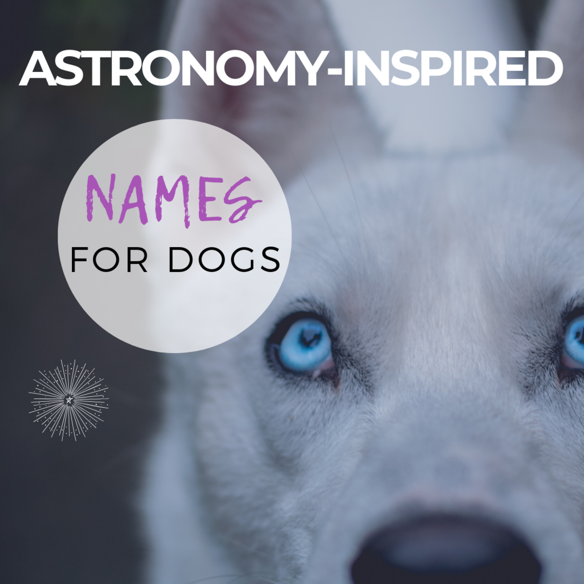 Astronomy-Inspired Names for Dogs