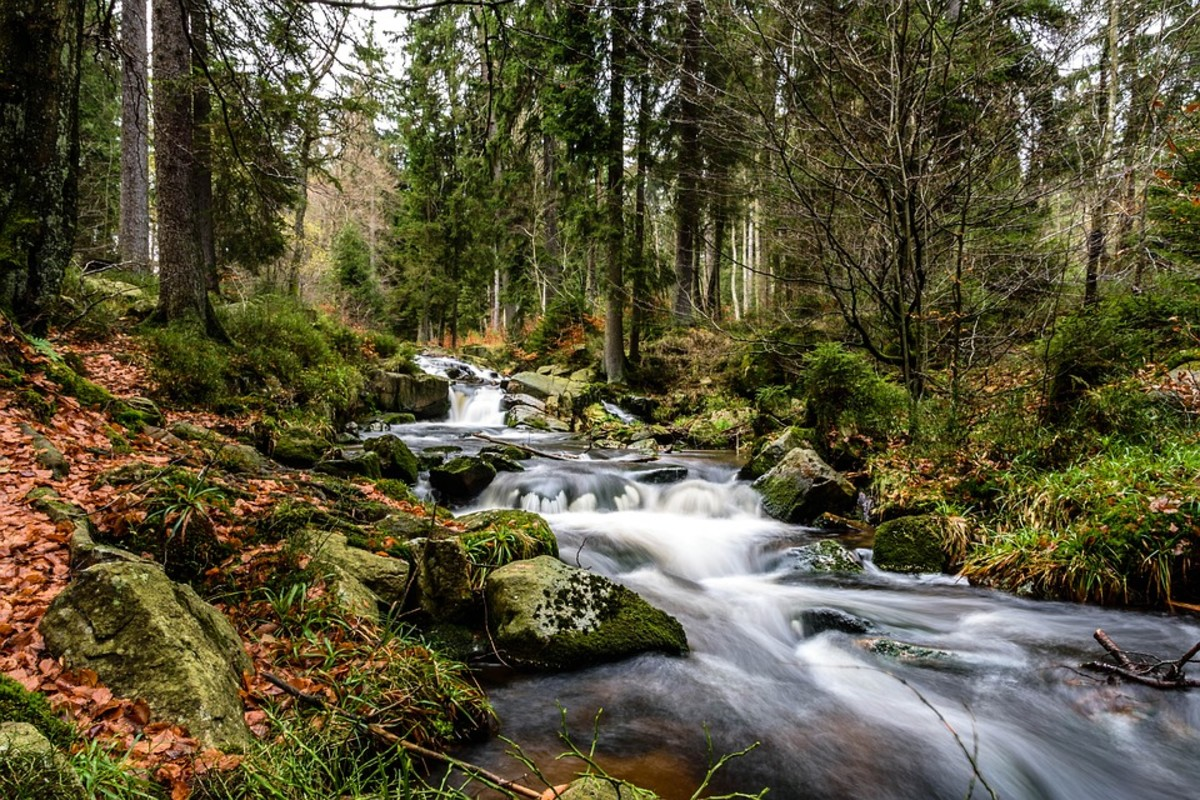 Complete peace and tranquility go with a creek or river situated in the wooded area.