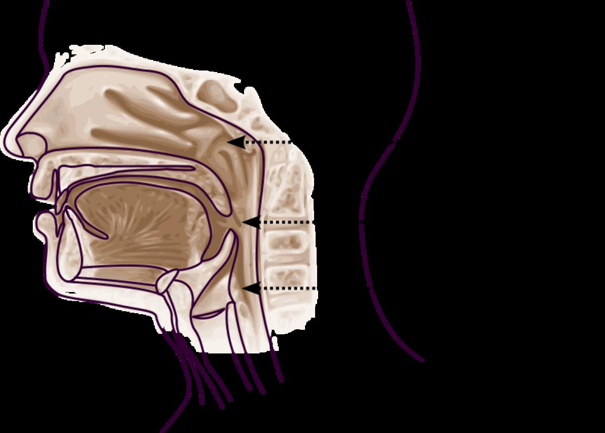 Naso-, Oro-, and Laryngo-pharyngeal anatomy