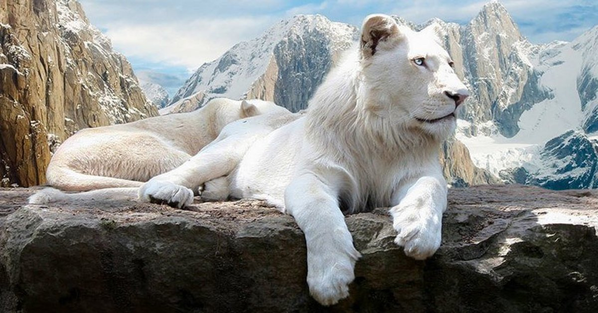 "No color necessary.  This lion, I'm sure, causes a jaw-dropping reaction for anyone who sees it.  When I ran across this photo, it was labeled as an ""albino lion"" but it's actually a leucistic lion.  Photographer is unknown."