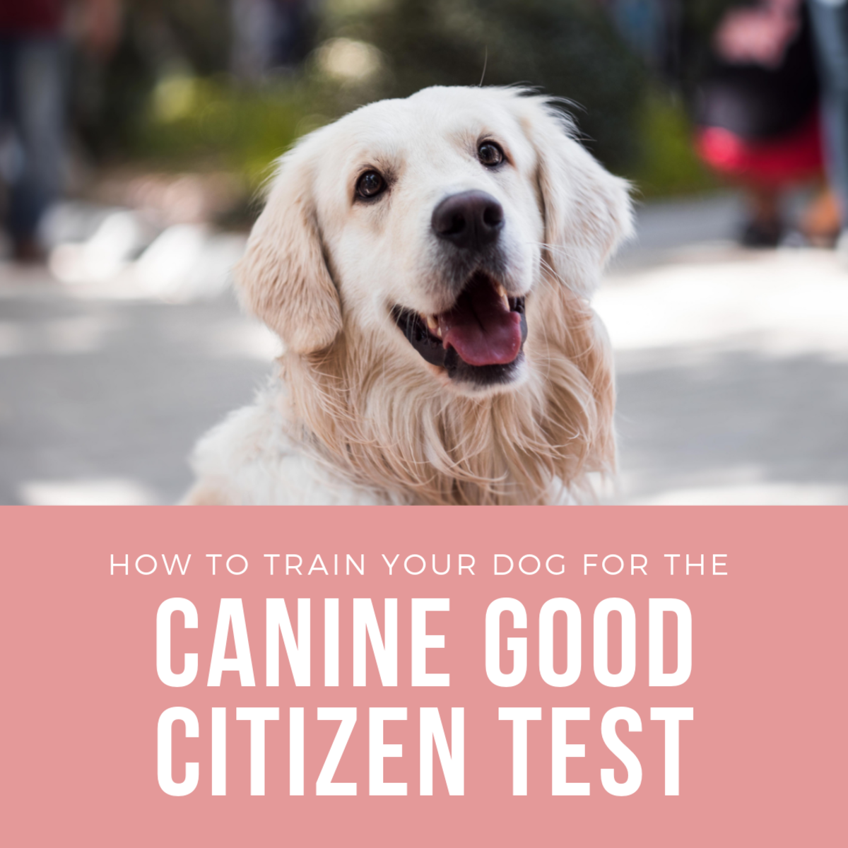 Learn how to help your dog pass the test!