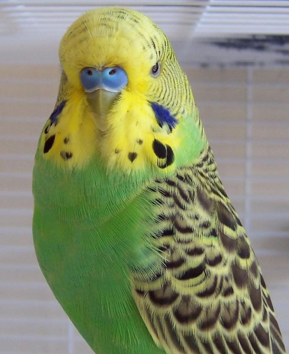Ideal Beginner Pets for a Bird Lover