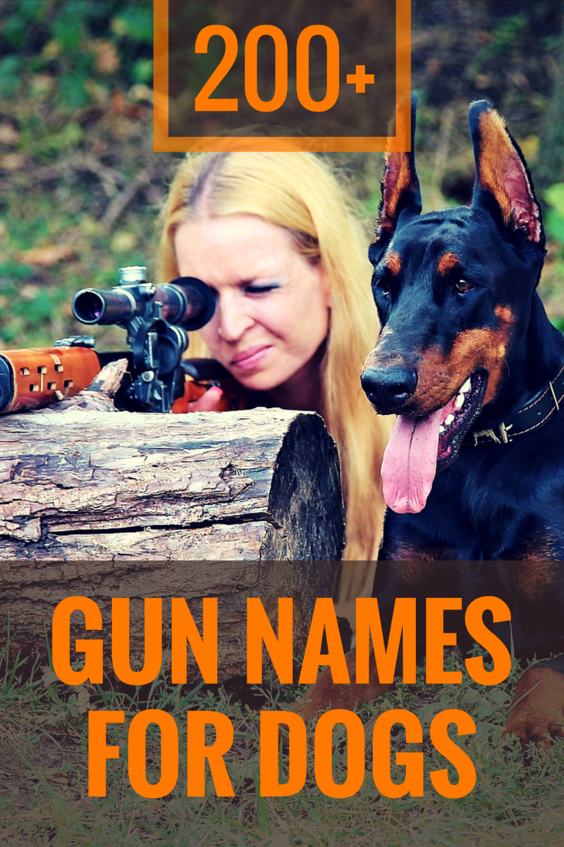 200+ Gun Names for Dogs
