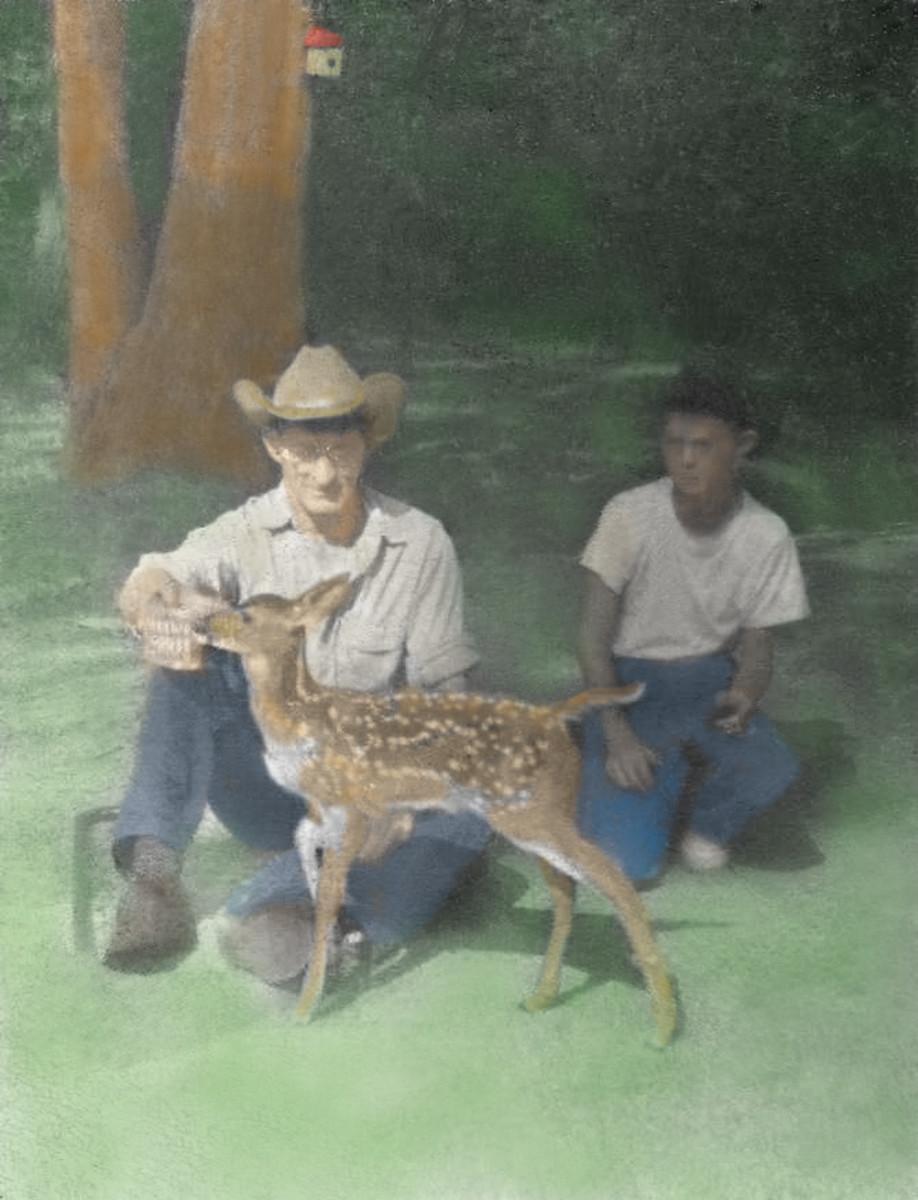 Our Pet Deer