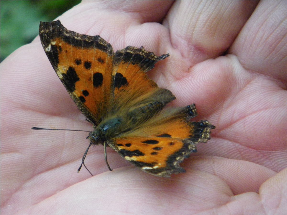 only-butterflies-are-free