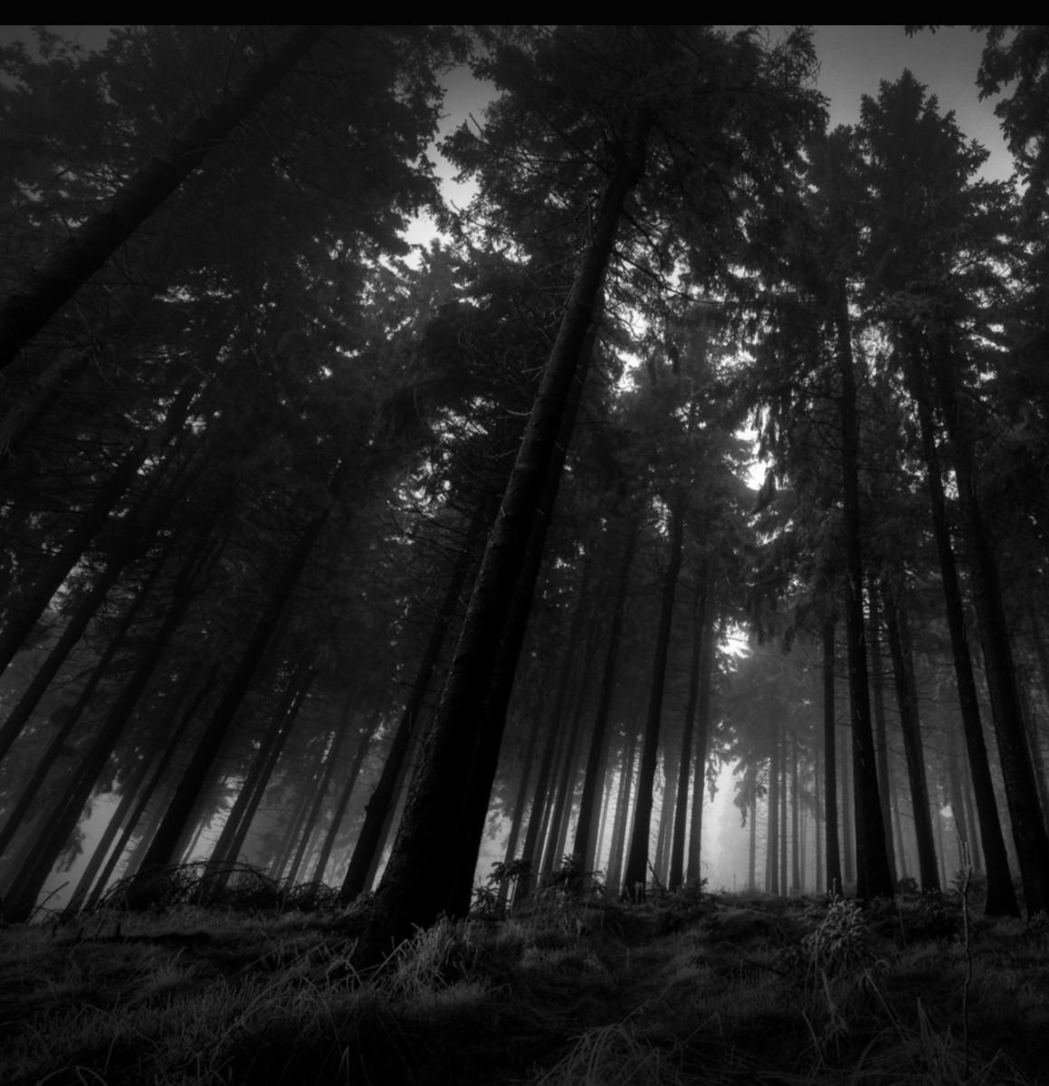 The Dark Woods Letterpile