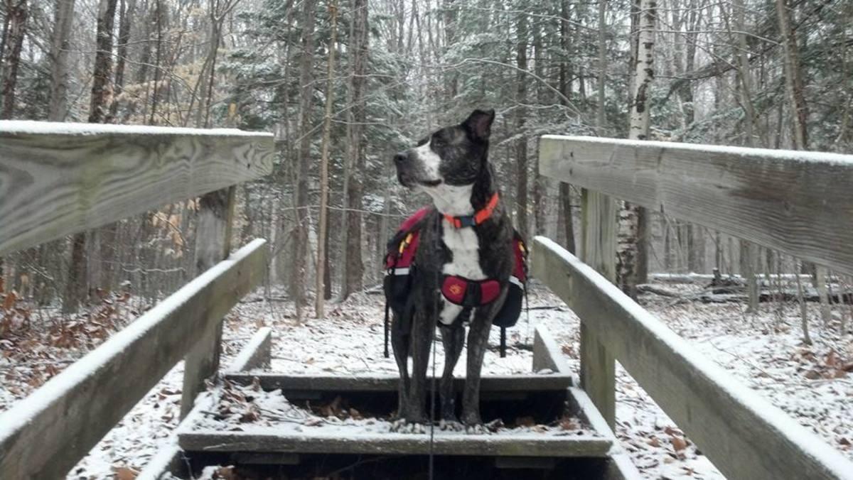Mesa and his Mountainsmith K-9 Dog Pack