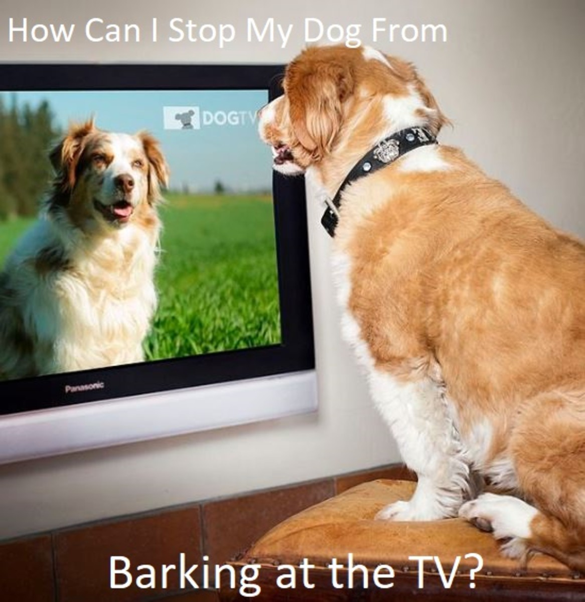 How to Keep a Dog From Barking at the TV
