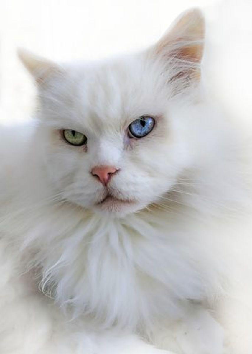 cats-want-to-kill-us-song-lyrics