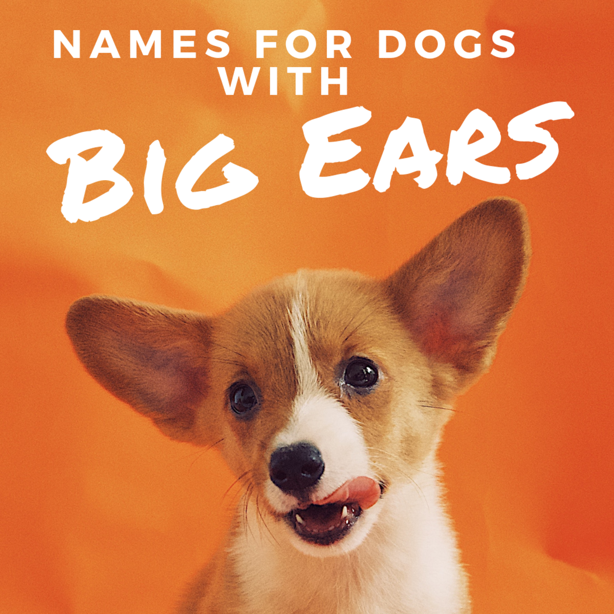 44 Names for Dogs With Big Ears