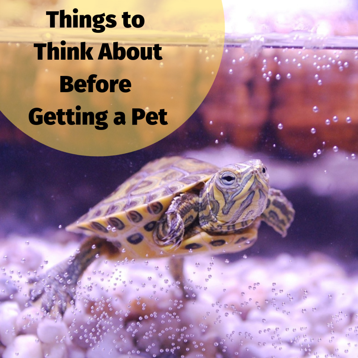 Getting a pet requires some careful planning and research beforehand.