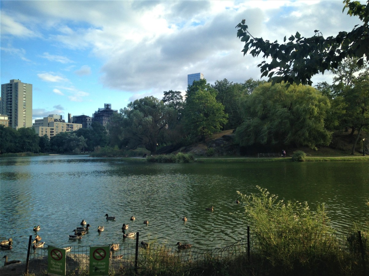 The Harlem Meer provides many opportunities to get active in Central Park- fishing, jogging and people watching are just some of the popular activities around the large water body.