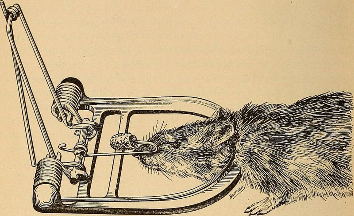 Write a Better Article and Readers Will Pound on Your Door, Rats! (Essay)