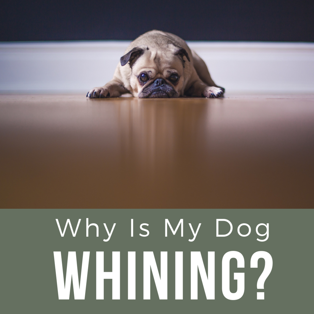 How Do You Get a Dog to Stop Whining?