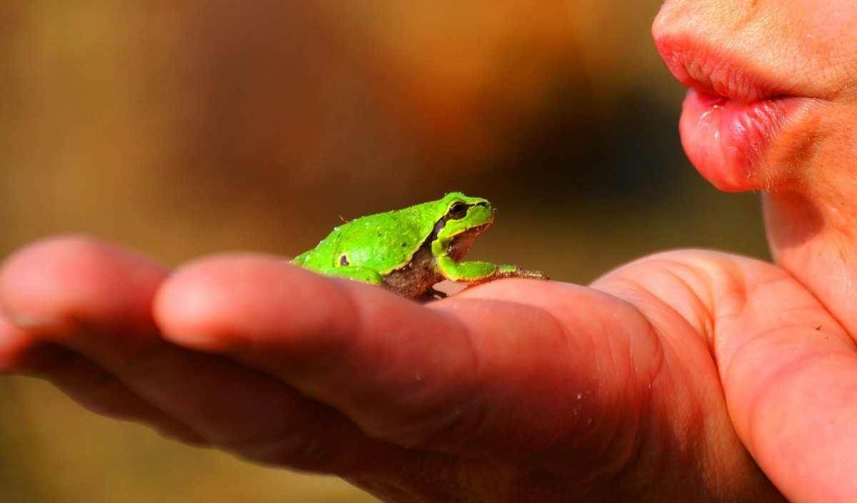 Kiss a frog to turn  it into a Prince