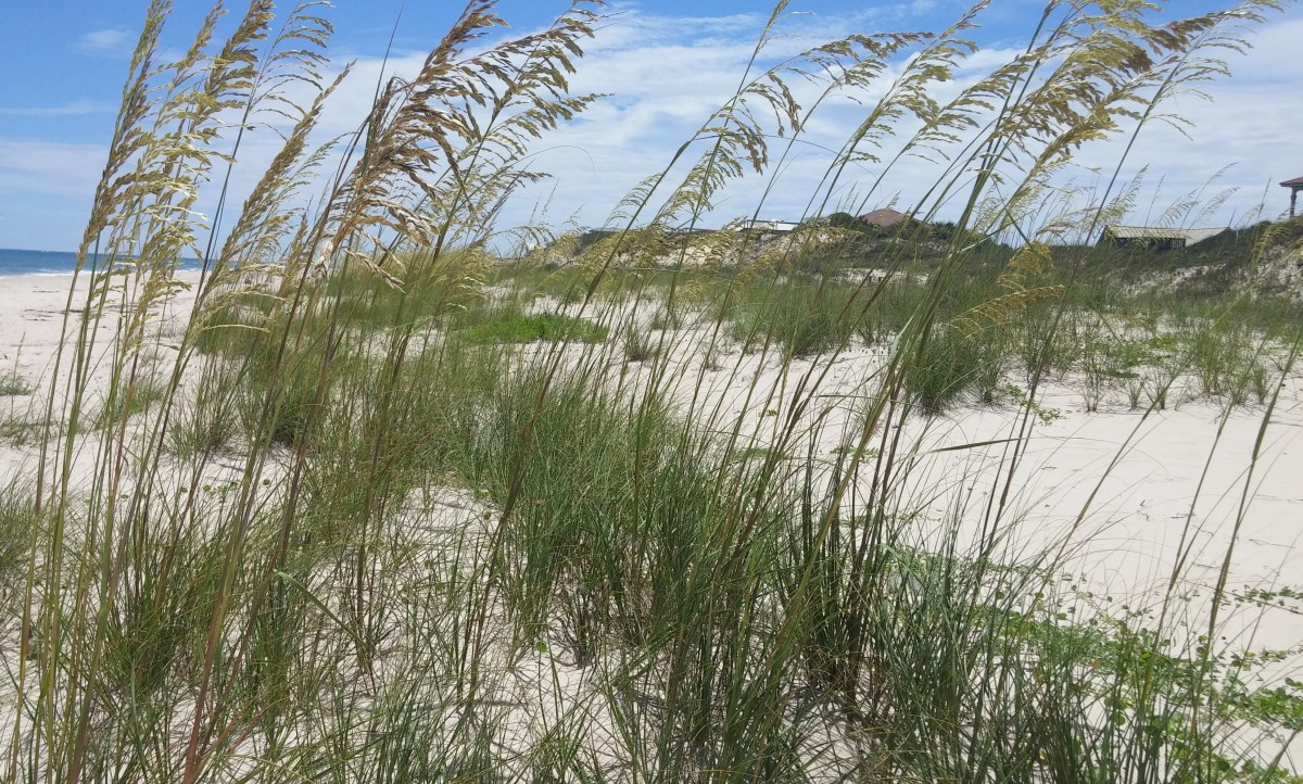 Each summer you can find me playing in the sand and swimming in the ocean. St. George Island, Florida