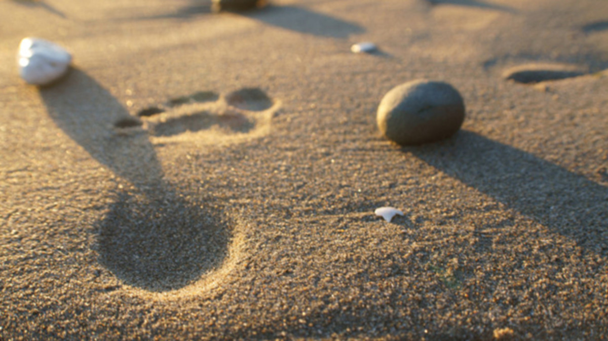 Footprints by Ariel Madrid