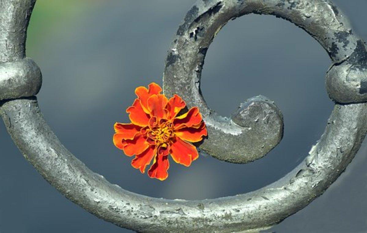 Spiral- a Poem
