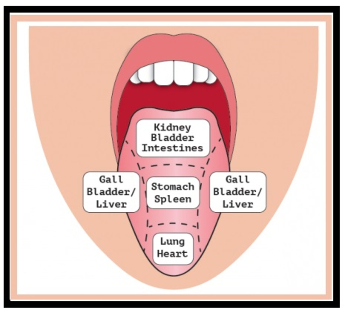 The tongue is used to determine the condition of the body.
