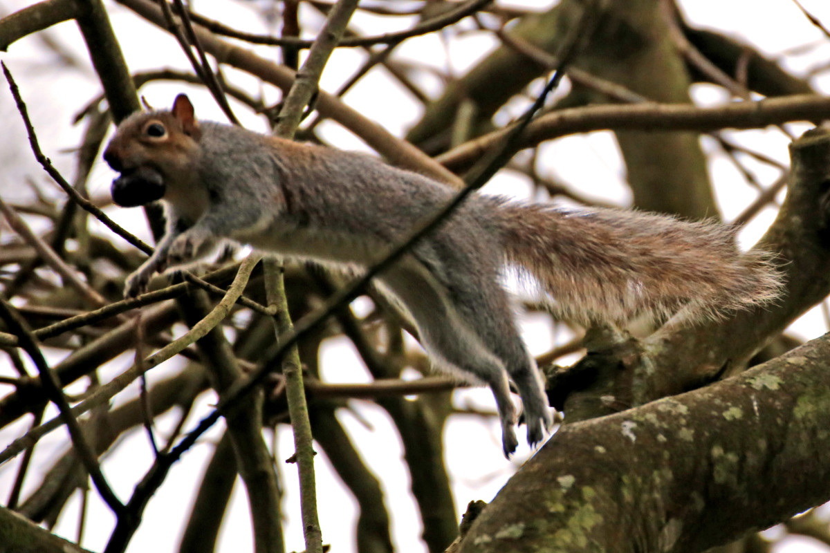 Ode to a Squirrel