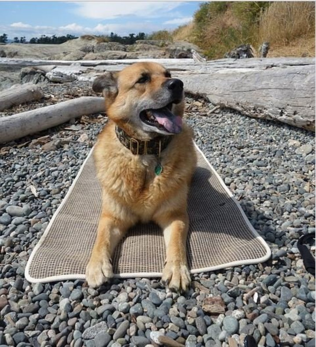 How to Train Your Dog to Go to His Mat