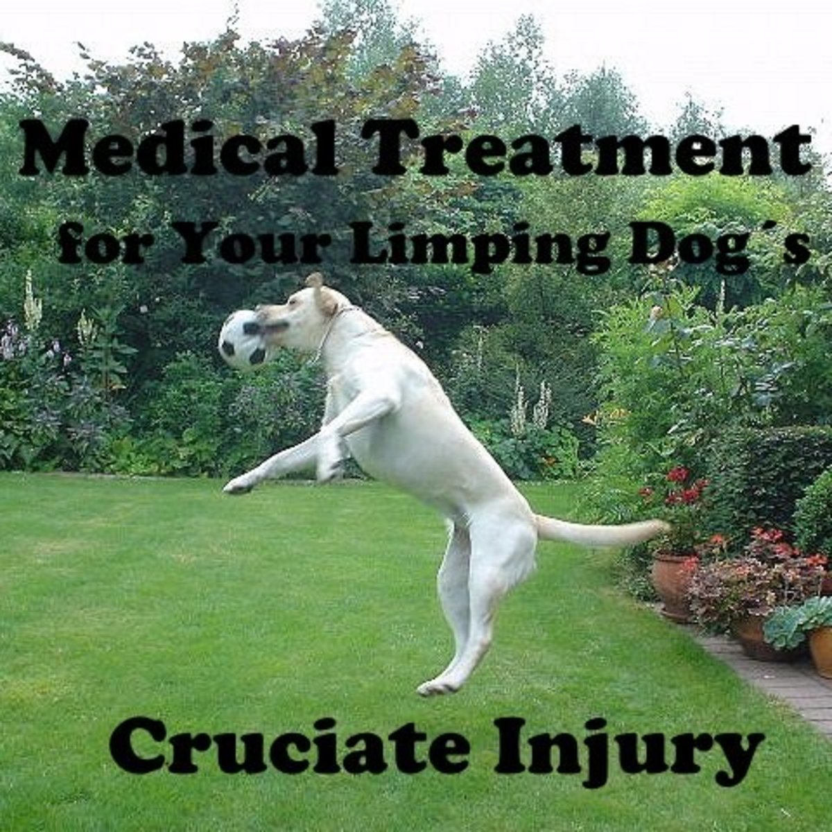 First Aid and Medical Treatment for Your Limping Dog's Damaged Cruciate Ligament (Surgery Is Not Your Only Option)