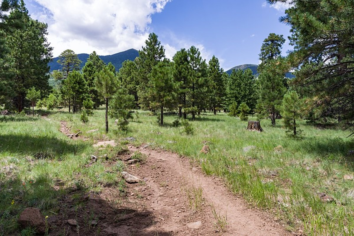 The Weatherford Trail, San Francisco Peaks, Flagstaff, AZ