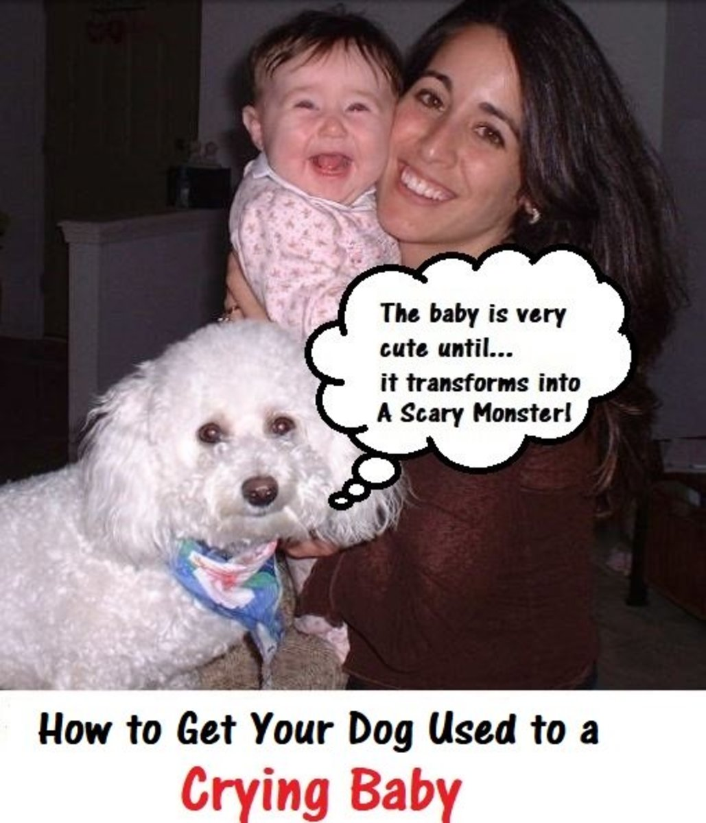 How to Get  a Dog Used to a Crying Baby