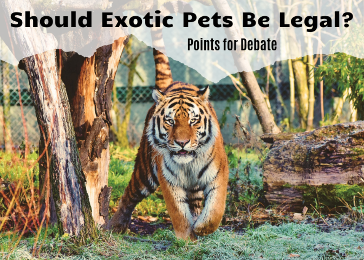Explore several pro arguments for owning exotic pets.