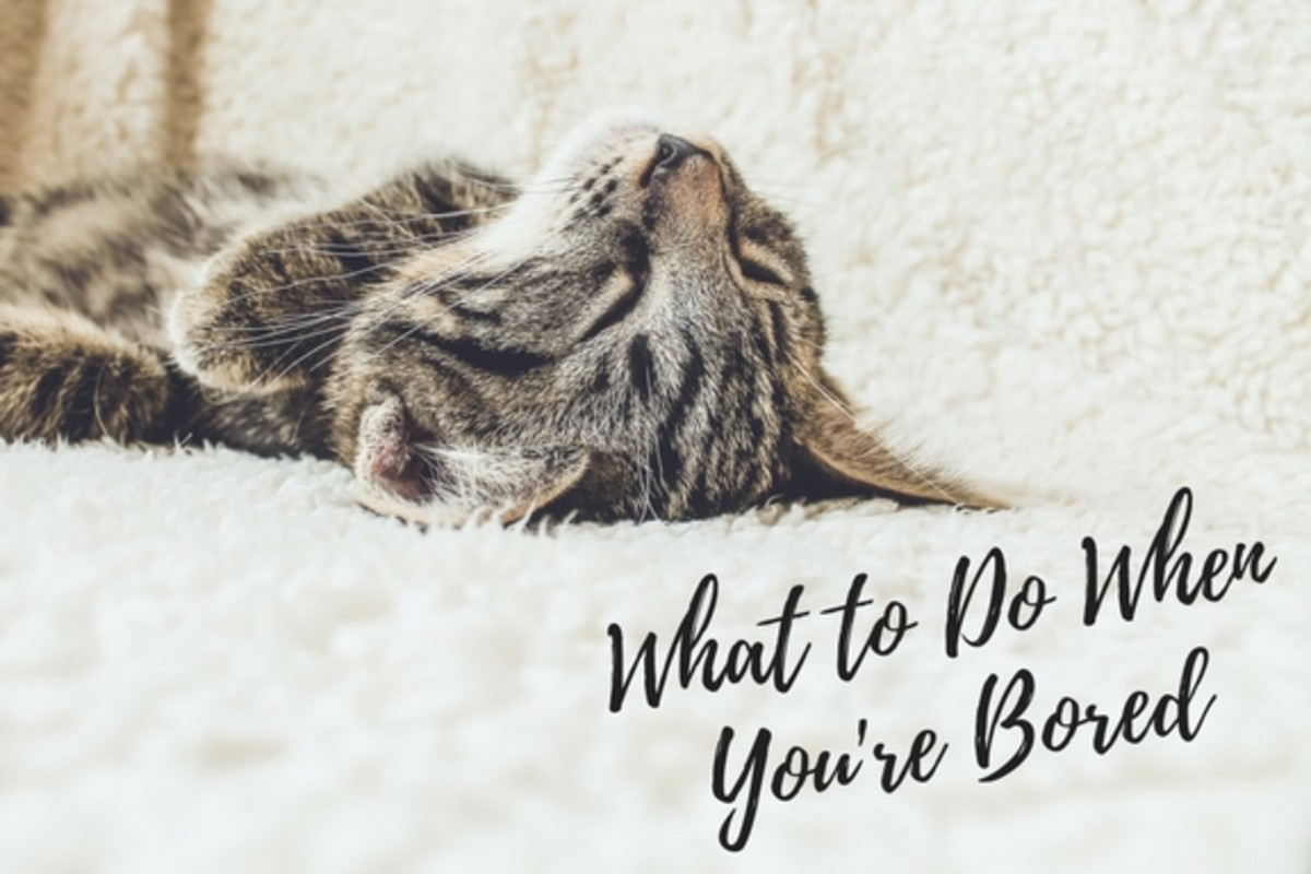 14 Things to Do When You're Bored