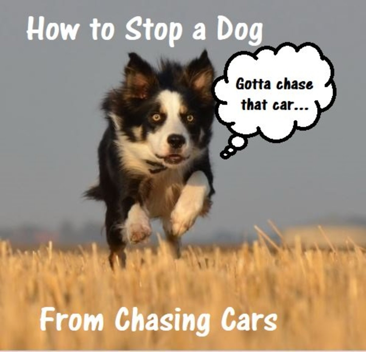 How to Stop a Dog From Chasing Cars